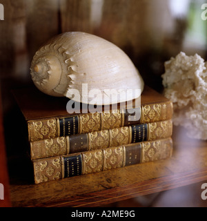 Seashell on book pile in glass-fronted bookcase - Stock Photo