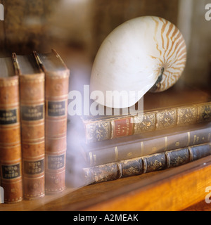 Seashell and books in glass-fronted bookcase - Stock Photo