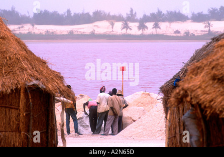 Men digging salt collected from the bottom of shallow Lac Retba or Rose Lake Senegal - Stock Photo