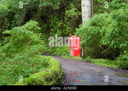 A red telephone box in woodland, Carsaig, Mull, Scotland - Stock Photo
