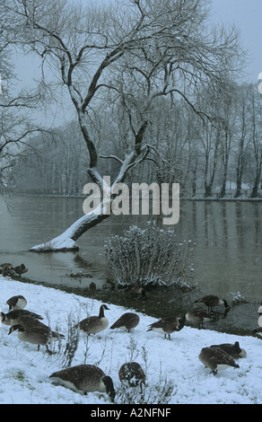 Winter by the River Thames, West Molesey, Surrey, England, UK - Stock Photo