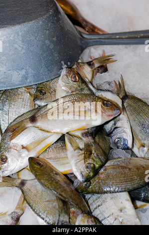 Fish for Soup (Soupe de Poisson), Ajaccio Fish Market, Corsica, France - Stock Photo