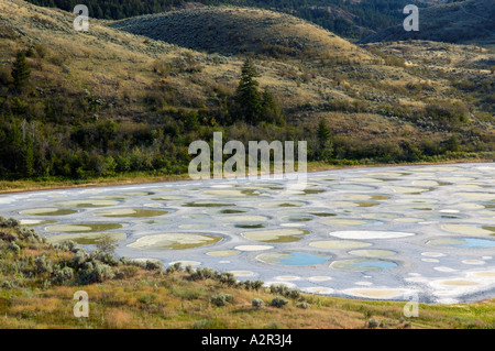Spotted lake salt crystal circles Okanagan valley British Columbia Canada - Stock Photo