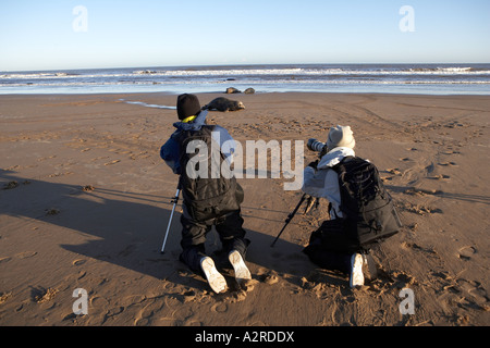 Nature photographers photographing Grey Seals at Donna Nook Lincolnshire - Stock Photo
