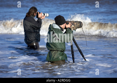 Two nature photographers wade into the sea to photograph Grey Seals at Donna Nook Lincolnshire - Stock Photo