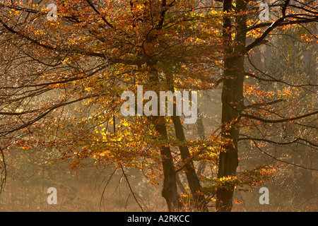 Autumn scene New Forest Hampshire England UK - Stock Photo
