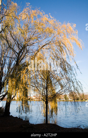 Willow trees and lake in the grounds of sculpture park Hamilton New Jersey USA - Stock Photo