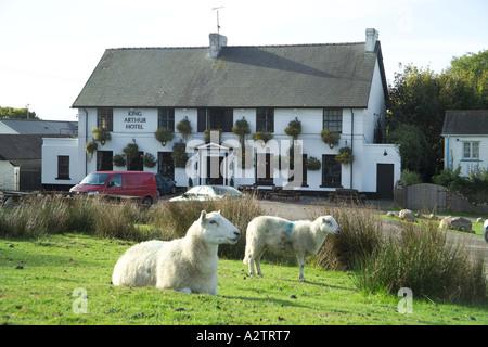 Sheep King Arthur Hotel Reynoldston Gower South Wales - Stock Photo