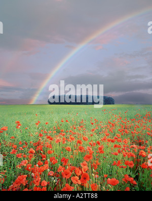 GB - GLOUCESTERSHIRE: Poppyfield and Rainbow in the Cotswolds - Stock Photo