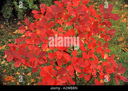 Red autumnal leaves - Stock Photo