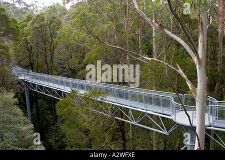 Otway Fly rainforest treetop walk, Victoria, Australia - Stock Photo