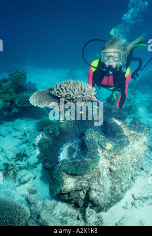 Australia. Queensland. Great Barrier Reef. Female scuba diver underwater with giant clam. - Stock Photo