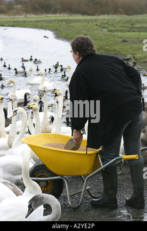 Feeding the birds at Caerlaverock WWT Reserve - Stock Photo