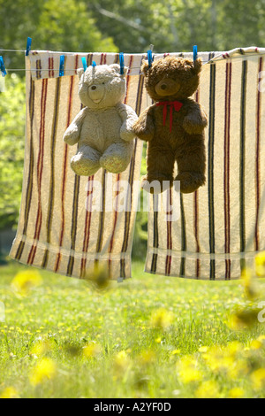 Tan and brown teddy bears hung on laundry line to dry with clothes pins in yellow wild flowered yard Maine USA - Stock Photo