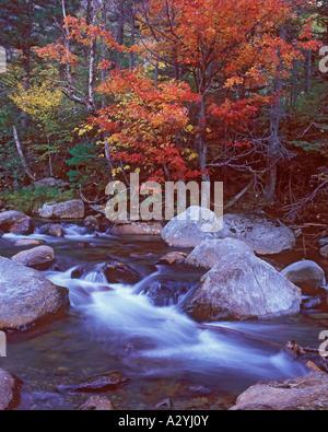 Cascade and autumn foliage along Glen Ellis Falls trail - Stock Photo
