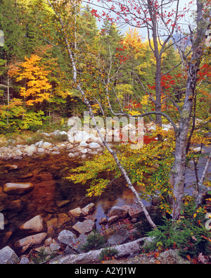Autumn colors above the Swift River - Stock Photo