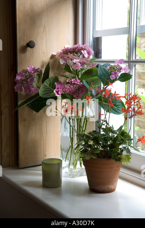Houseplant on windowsill of early 19th century London house - Stock Photo