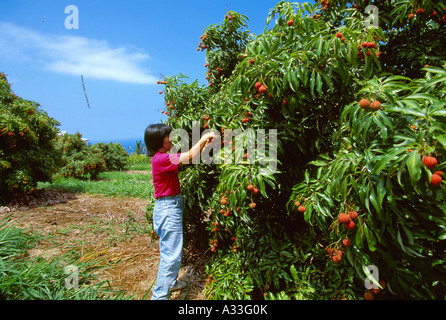 Mature fruit trees online