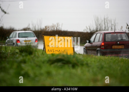 Amusing road sign after the escape of wild boar - Stock Photo