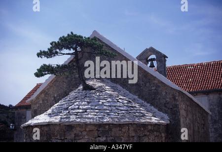 Tree growing from a church roof iin Makarska on the Dalmatia Coast, Croatia - Stock Photo
