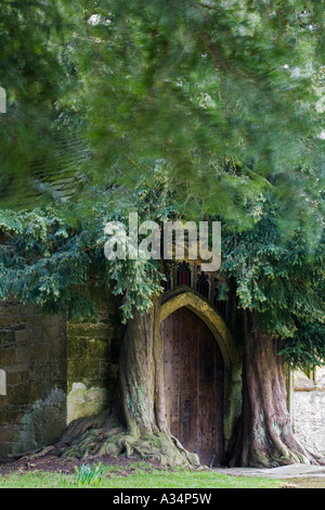Ancient yew trees flank the doorway of St Edwards Church Stow on the Wold - Stock Photo