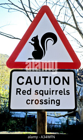 Road sign warning of the presence of red squirrels in Lake District England UK EU - Stock Photo