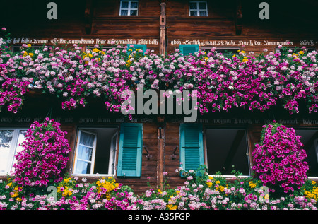 flowers growing in the window boxes of a traditional Swiss alpine chalet Wengen Bernese Oberland Switzerland - Stock Photo
