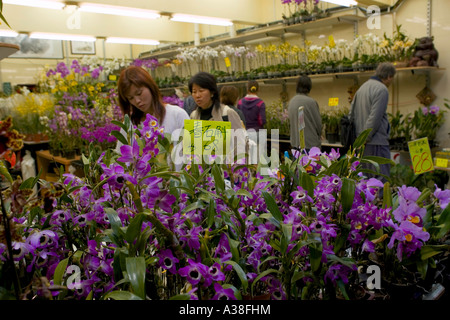 Shopping for flowers in Hong Kong's flower district. - Stock Photo