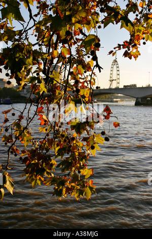 View towards the Millennium Eye River Thames London - Stock Photo