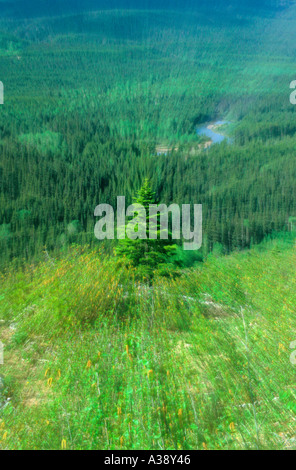 Spruce Tree zoom - Stock Photo
