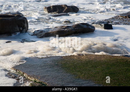 dirty looking sea foam gathered around wet rocks on a beach - Stock Photo