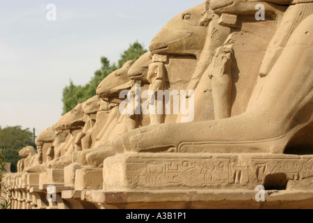 The Processional Avenue of Sphinxes between the great temples of Luxor and Karnak, Karnak, Egypt - Stock Photo