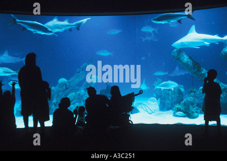 People standing in front of large aquarium admiring the fish sharks at the Albuquerque Biological Park - Stock Photo