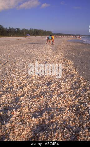 USA Florida Sanibel Island shell collecting on Bowmans Beach - Stock Photo