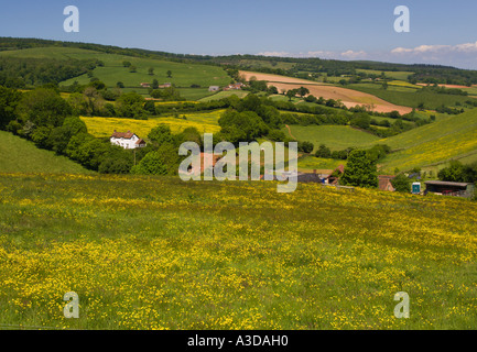 Typical English countryside scene over Quantock Hills with trees beyond white farmhouse and shed Somerset England - Stock Photo