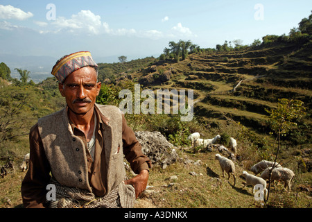 Indo-German-Changar-Eco-Development-Project, shepher Man-Singh with his sheep and goats on the street between Guana - Stock Photo