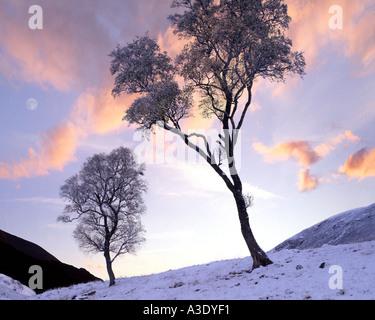 GB - SCOTLAND: Wintertime in Glen Lochsie - Stock Photo