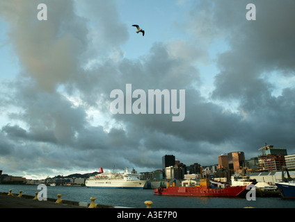 New Zealand, Wellington City. Cruise Liner Nippon Maru in port, dramatic sky with  seagull - Stock Photo