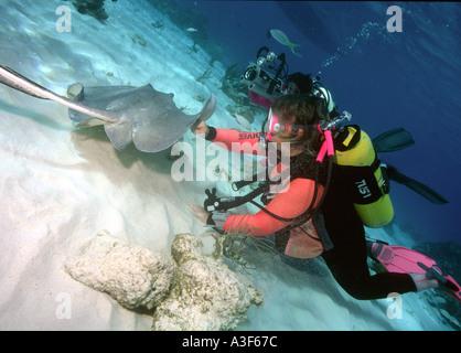 underwater, stingray city, cayman islands, scubadiving, stingrays - Stock Photo