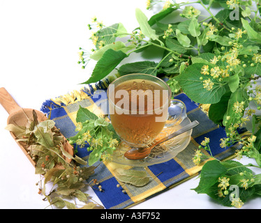 Lime tree infusion Tilia platyphyllos - Stock Photo