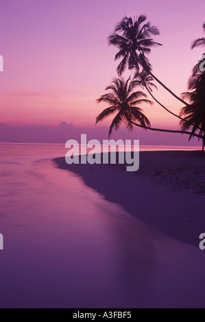 Palm trees over calm shore at dawn in Maldive Islands - Stock Photo