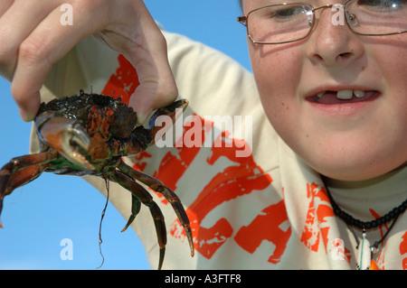 Boy, wearing glasses, holding a crab in Bidemouth north Devon England UK Europe - Stock Photo