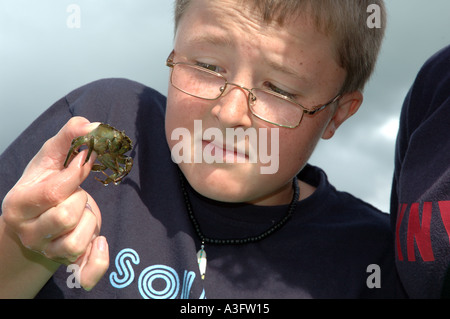 Young boy, wearing glasses, holding a small crab in Bidemouth north Devon UK Europe - Stock Photo
