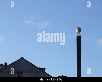 bird standing on wooden pole outdoors - Stock Photo