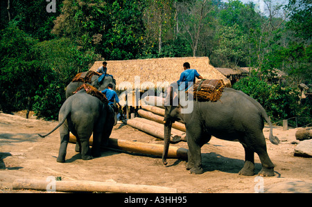 chiang dao elephant camp near city of chiang mai thailand editorial use only - Stock Photo