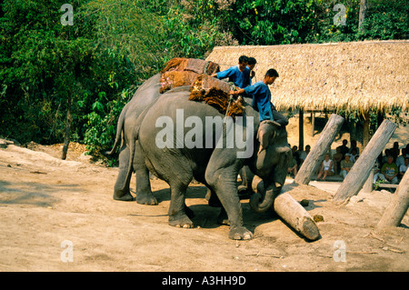chiang dao elephant camp near city of chiang mai thailand - Stock Photo