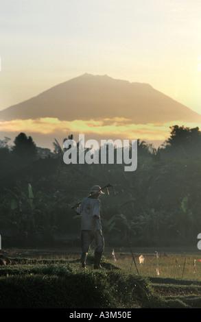 Gunung Batukau Central Bali Indonesia Viewed from Ubud at dawn Balinese man attending to his crop - Stock Photo