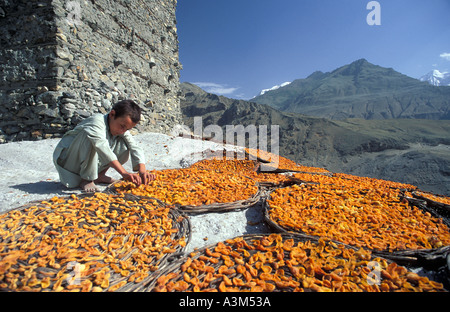 Sunbaked Apricots Apricots laid out in flat baskets to dry in the baking Himalayan sun - Stock Photo