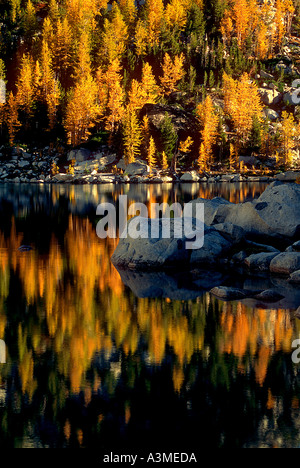 Fall larches surround the lakeshore of Inspiration Lake in the Enchantment Lakes Alpine Lakes Wilderness Washington - Stock Photo