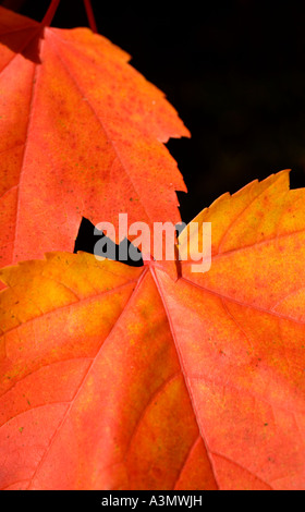 Red leaves at Autumn - Stock Photo